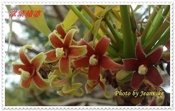 DSC09593-crop.JPG