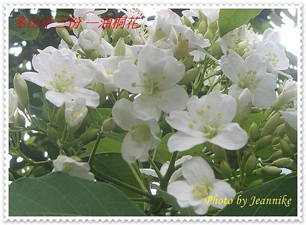 IMGP3049-crop.JPG