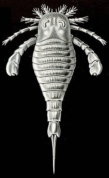 Haeckel_Eurypterus_tetragonophthalmus
