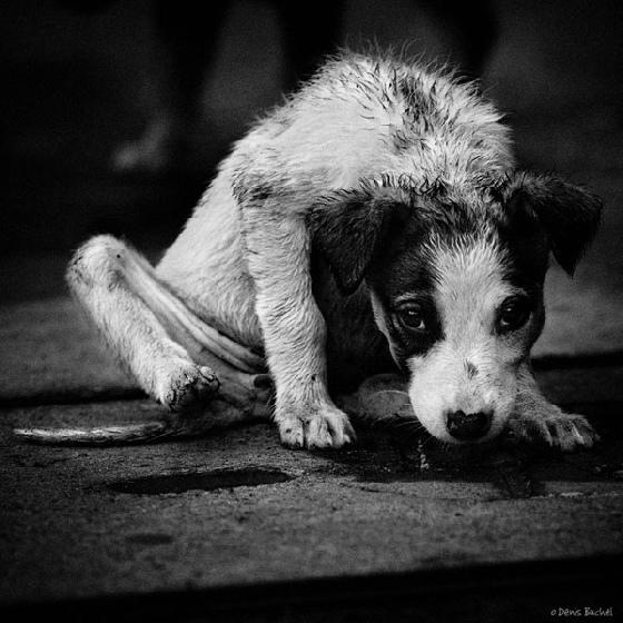streetdog1.560 (1)