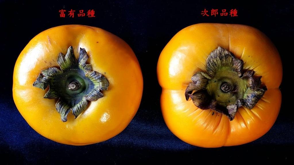 20150926 (4A) 竹62公路xKm處 [富有(左)%26;次郎(右)甜柿].jpg