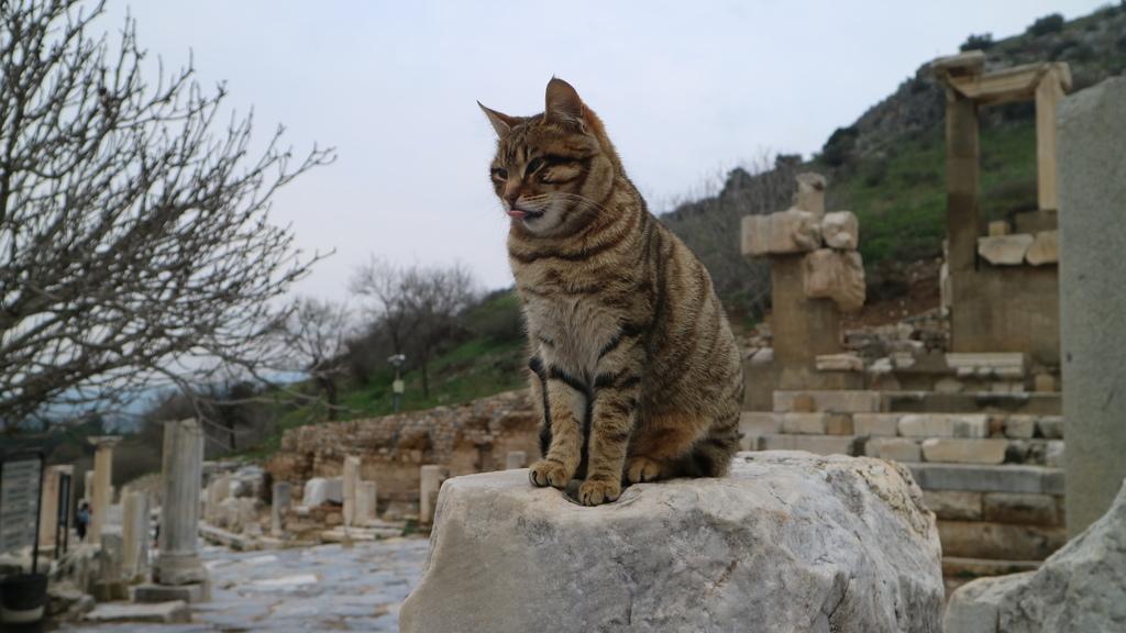 IMG_5037 艾菲索斯(Ephesus)的希臘%26;羅馬古蹟遺址.JPG