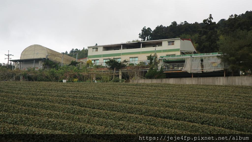 20190205 (916) 茂馨民宿%26;附近的茶園.JPG