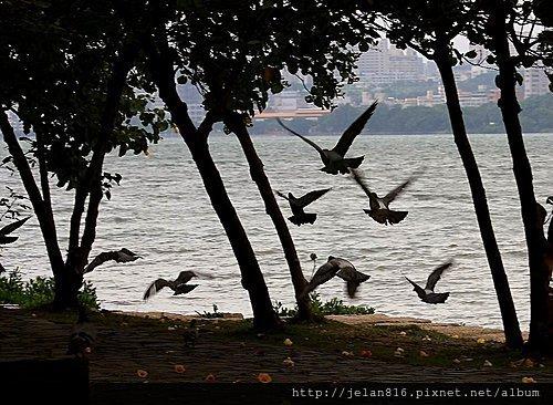 鴿子1j9QEViyt7WKa_LdiqFpRKA