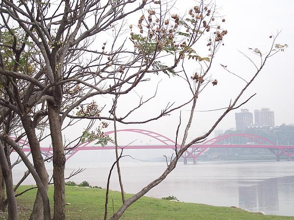 枯木與橋-1.JPG