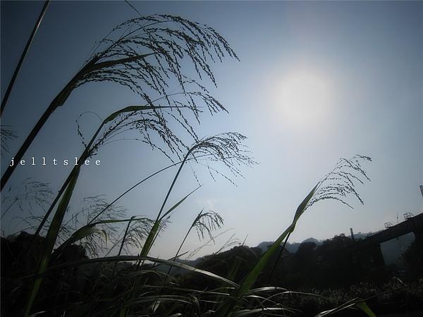 img_0317_副本.jpg