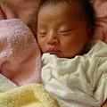 剛出生時小小一隻.JPG