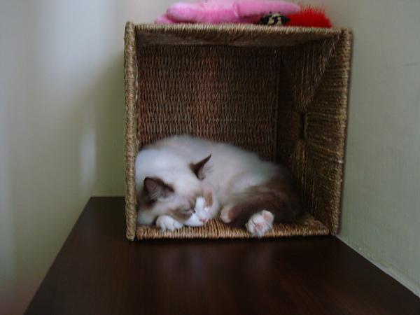 這個草編整理箱是她的最愛...有香味有隱私