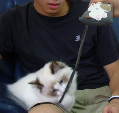 """相機上的貓圖案""""是她"""""""