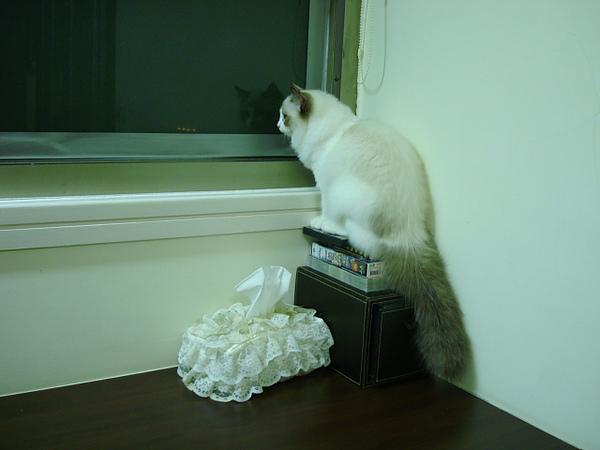 爬上書桌看窗外