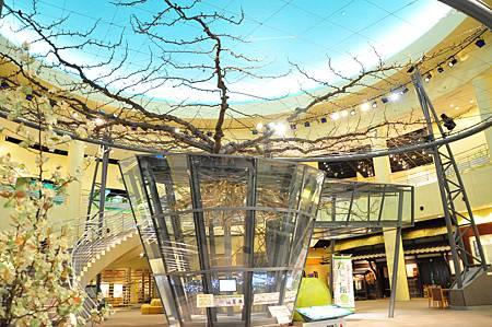 館內展示樹齡為74年的梨樹標本,最高記錄一次結了4000顆梨子
