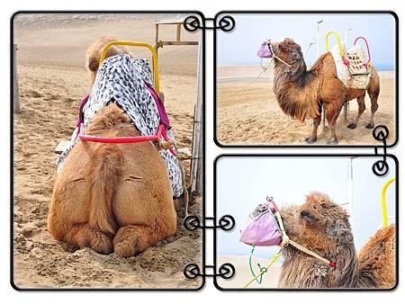 然後我們回到砂丘入口處準備要來去找駱駝