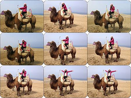 花了500円可以坐在上面拍照,駱駝那兩個高峰設計的嘟嘟好,我剛好整個人卡在峰間