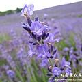 富良野-札幌canon 027