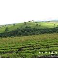 阿寒湖-上士幌町高原牧場-帶廣canon 108