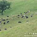 阿寒湖-上士幌町高原牧場-帶廣canon 107