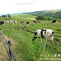 阿寒湖-上士幌町高原牧場-帶廣canon 129