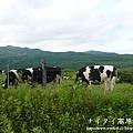 阿寒湖-上士幌町高原牧場-帶廣pana 135