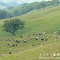 阿寒湖-上士幌町高原牧場-帶廣pana 139