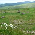 阿寒湖-上士幌町高原牧場-帶廣pana 142