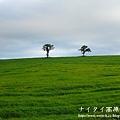 阿寒湖-上士幌町高原牧場-帶廣pana 177
