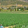 龍磐-滿州-車城D7 319
