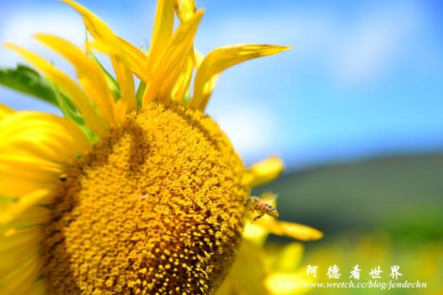 龍磐-滿州-車城D3 129