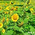 龍磐-滿州-車城D7 241