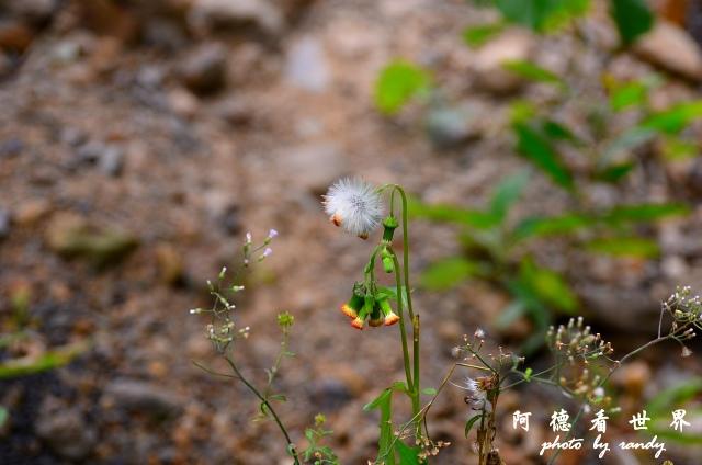 南仁湖D7 024.JPG