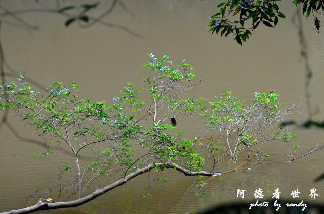 南仁湖D7 055.JPG