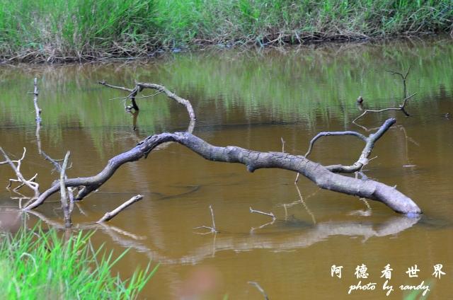南仁湖D7 083.JPG