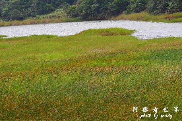 南仁湖D7 124.JPG