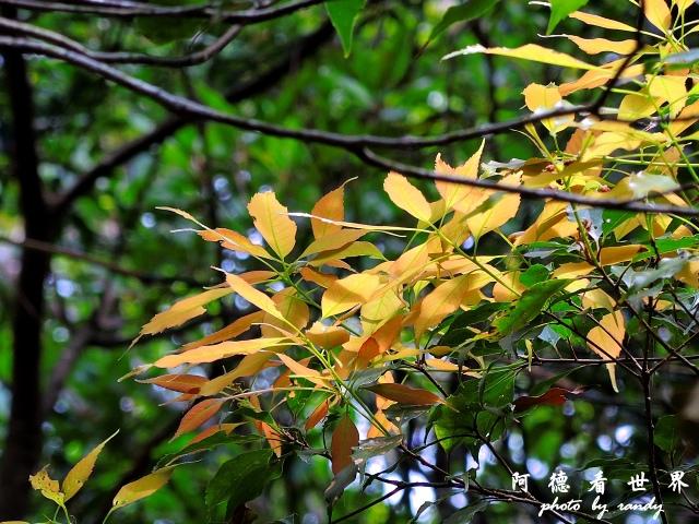 南仁湖P77 135.JPG