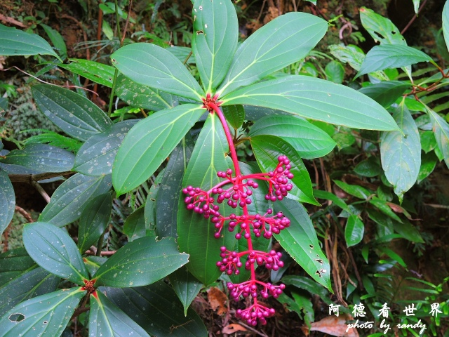 南仁湖P77 240.JPG