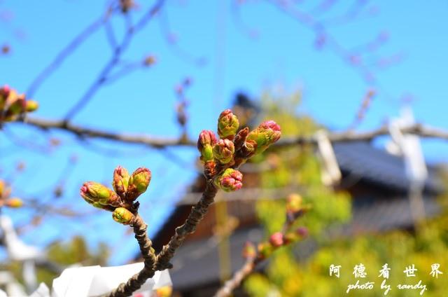 中津-湯布院D7 021.JPG