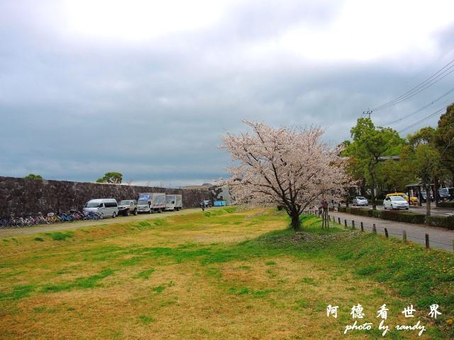 佐賀-嬉野P77 039.JPG