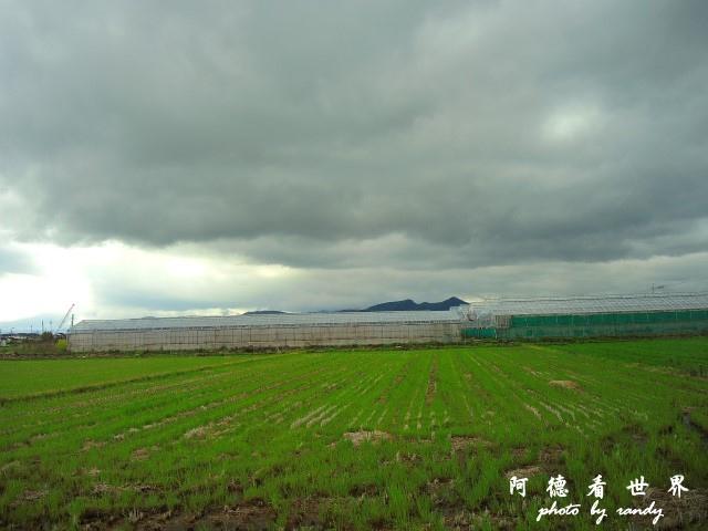 佐賀-嬉野P77 056.JPG