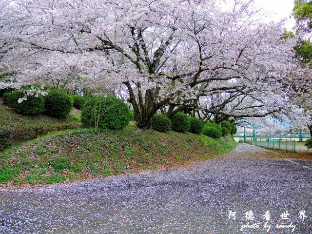 佐賀-嬉野P77 060.JPG