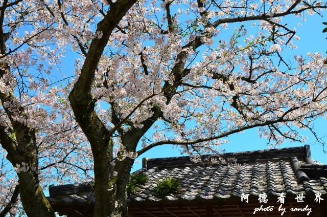 呼子-唐津-福岡D7 171.JPG