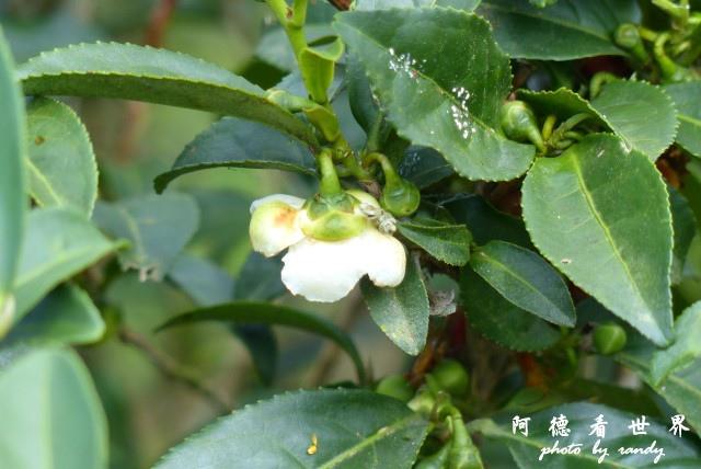 熊空茶園-三耕居FZ 097.JPG