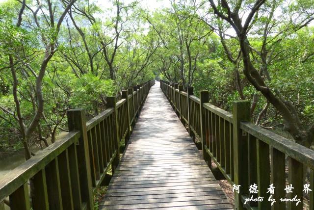 紅樹林-淡水FZ200 030.JPG