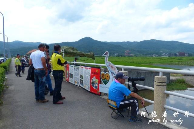 2015-05-29 金山清水濕地FZ200 129.JPG