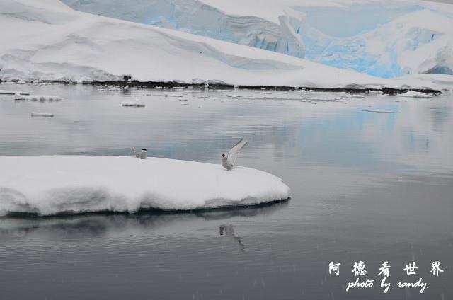 南極4D7 286.JPG