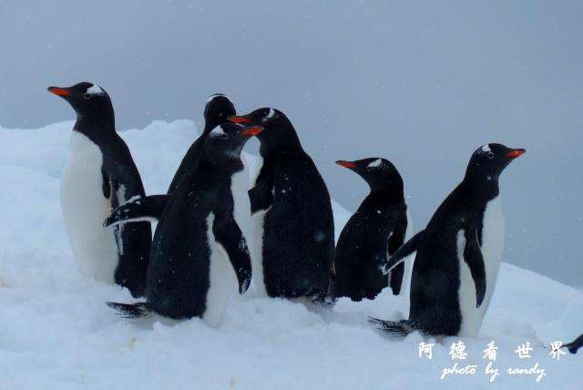 南極4FZ (243).JPG