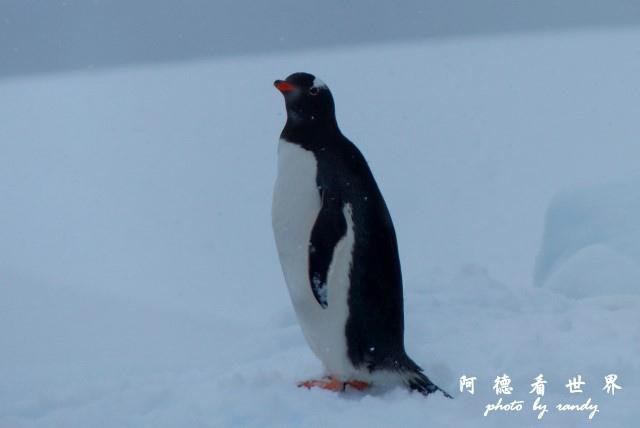 南極4FZ (247).JPG