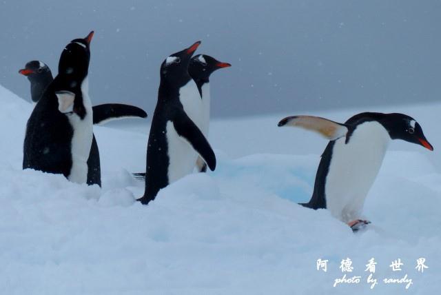南極4FZ (248).JPG