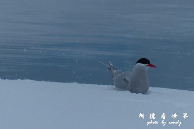 南極4FZ (313).JPG