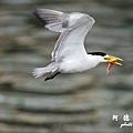 大溪漁港0625D7000 040.JPG