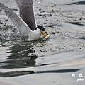 大溪漁港0625D7000 081.JPG