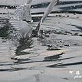 大溪漁港0625D7000 080.JPG